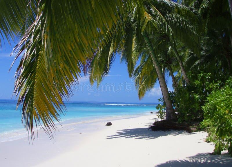 пляж paradisiac стоковое изображение