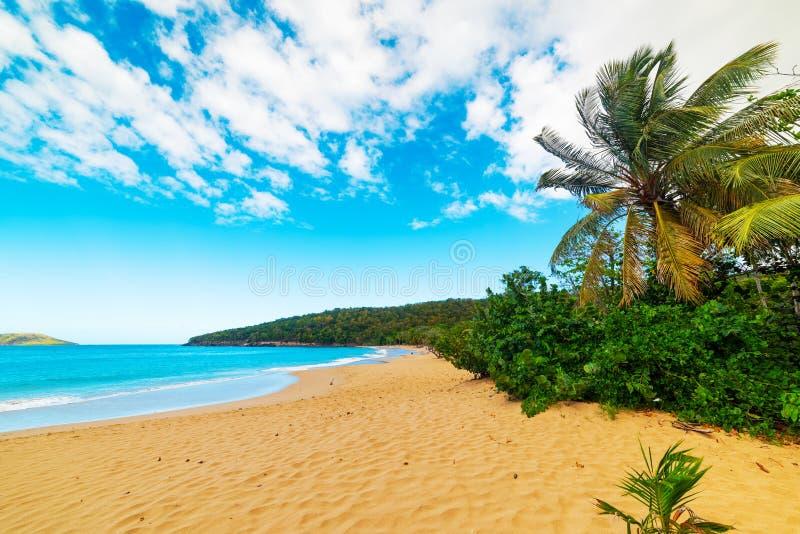 Пляж Perle Ла в Гваделупе стоковое фото