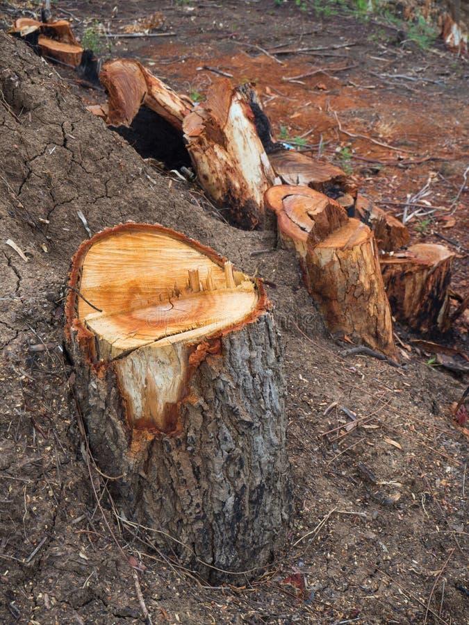 Пни выведенные от обезлесения стоковые фото