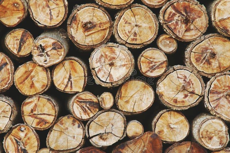 Пни дерева деревянные как предпосылка текстуры стоковое изображение