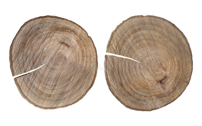 Пни дерева изолированные на белой предпосылке стоковые изображения