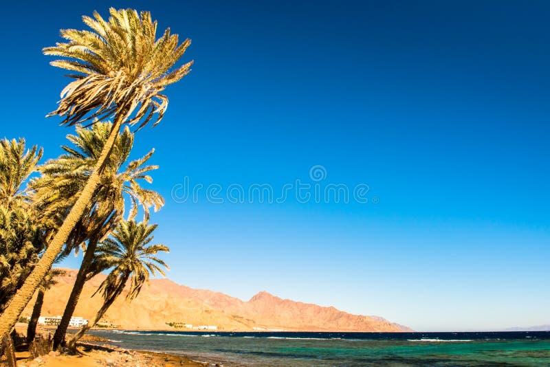 Побережье Красного Моря, в Gulf of Aqaba, около Dahab Египет стоковые изображения