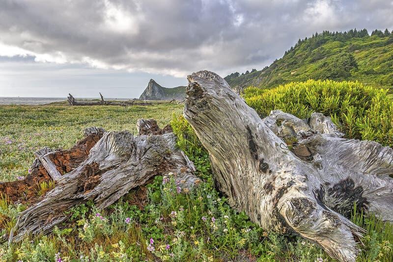 Побережье северной калифорния стоковые фото