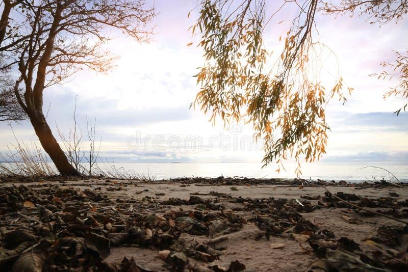 Побережье Gulf of Finland в вечере на ландшафте захода солнца как предпосылка стоковые фотографии rf