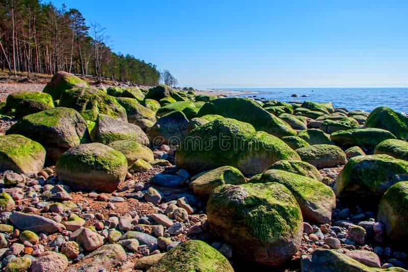 Побережье Kurmrags Балтийского моря стоковая фотография