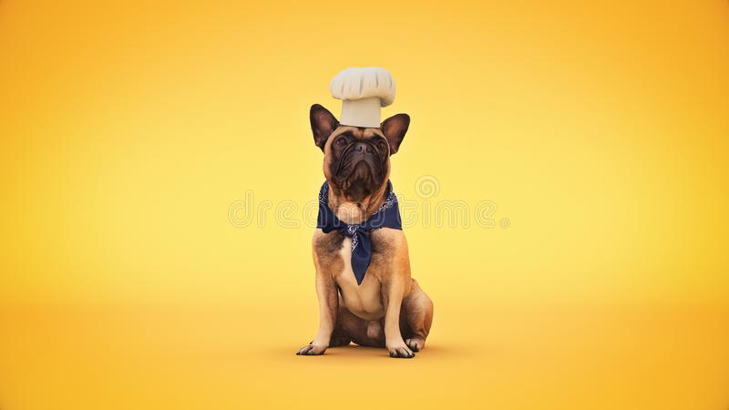 Повар шеф-повара собаки r стоковые изображения