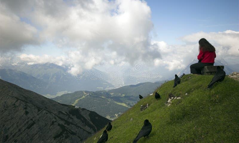 Download повелительница птиц черная стоковое изображение. изображение насчитывающей alpines - 6850621