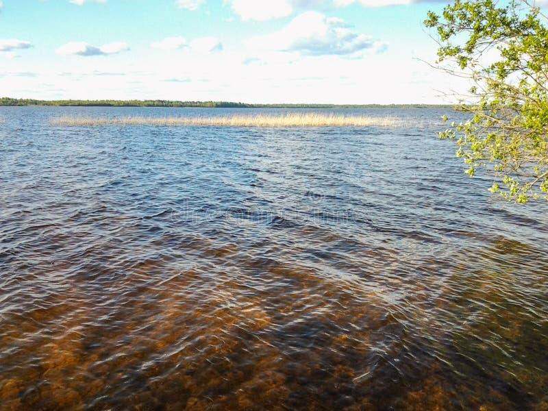 Поверхность воды привлекает глаз стоковые изображения rf