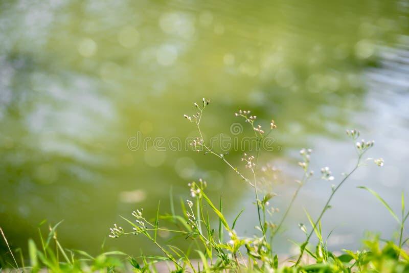 Поверхность воды с пульсациями и отражениями солнечного света стоковые изображения