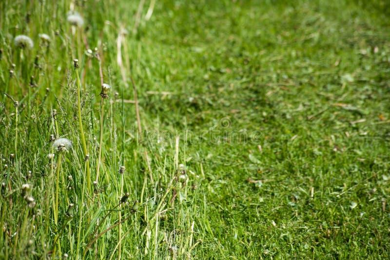 Поверхность травы растущих и отрезка стоковые фото