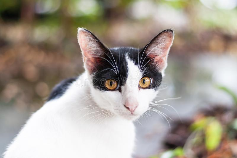 Поворот и взгляд кота к камере стоковое изображение rf