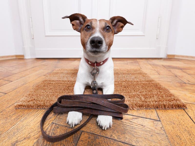 Поводок собаки кожаный стоковые изображения rf