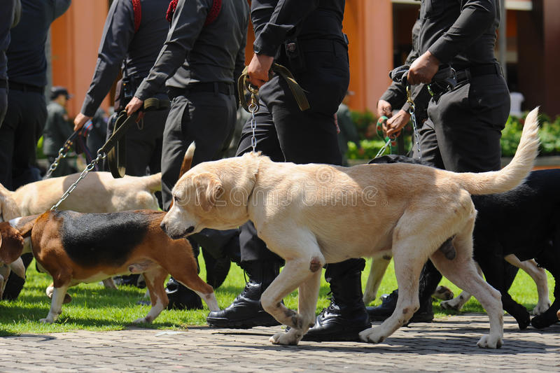 Поводок собаки стоковое фото
