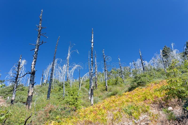 Повреждение лесного пожара стоковые изображения rf