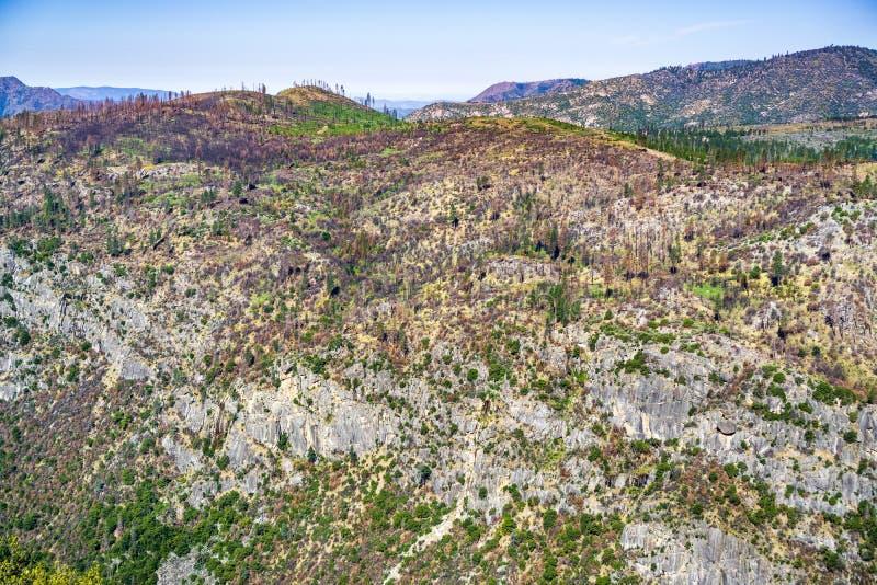 Поврежденный лесным пожаром наклон горы показывая знаки спасения в национальном парке Yosemite, горы сьерра-невады, Калифорния стоковые фотографии rf