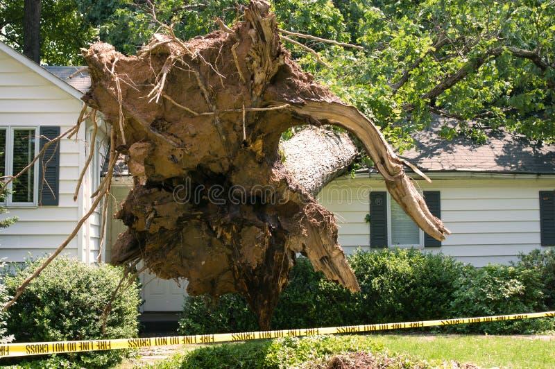 Повреждение дома на дереве стоковое изображение