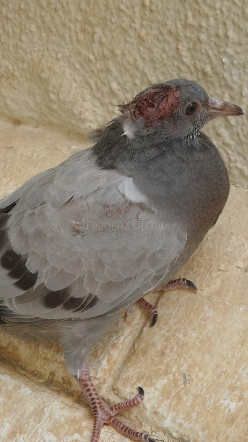 поврежденная птица стоковое изображение rf