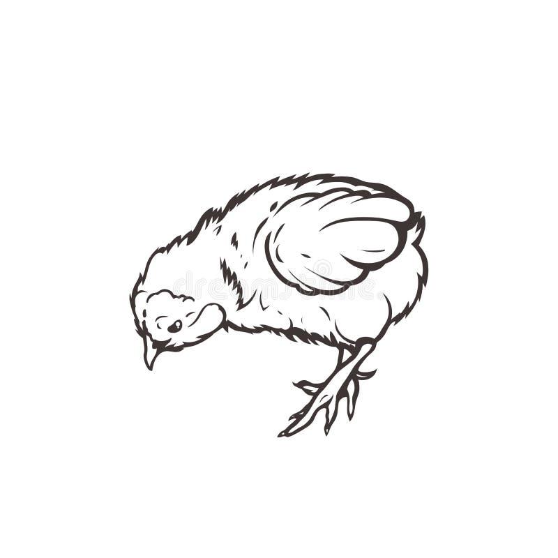 Повышение поголовья сельского хозяйства птицы цыпленока вычерченная рука иллюстрация штока