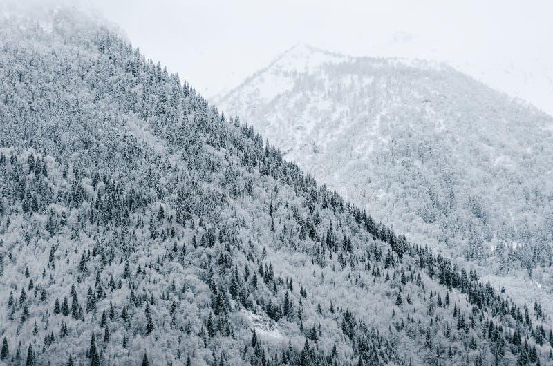 Погода зимы, горы при ели, покрытые с снегом, туман спускает сверху, красивая естественная предпосылка стоковые фото