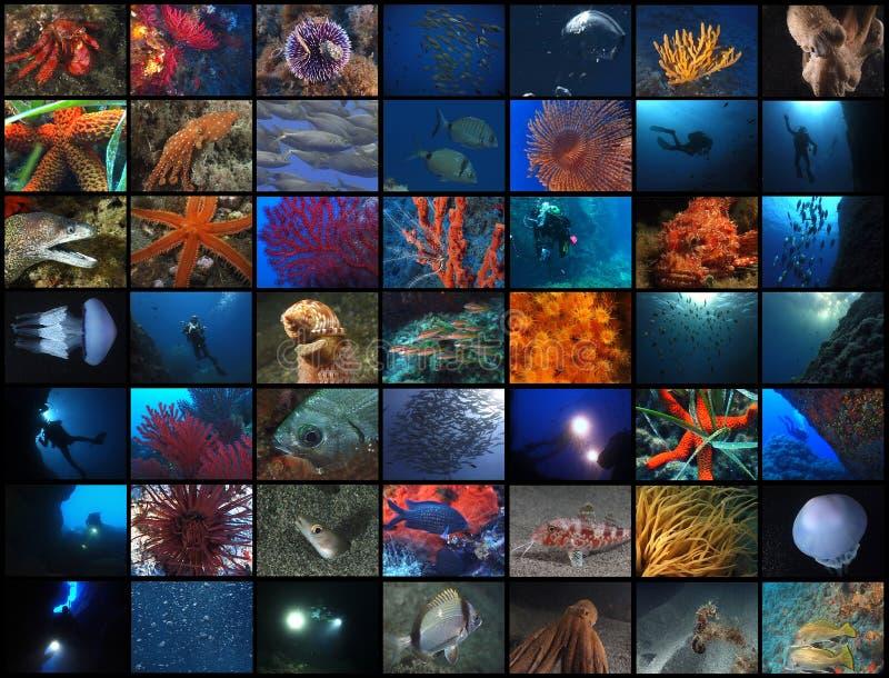 погруженный в воду мир стоковые изображения rf