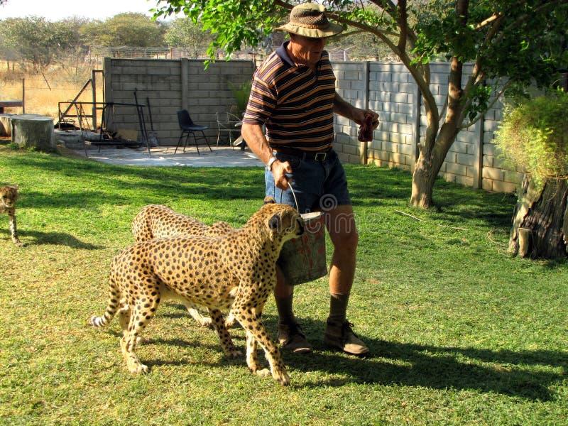 подавать гепарда стоковое фото rf