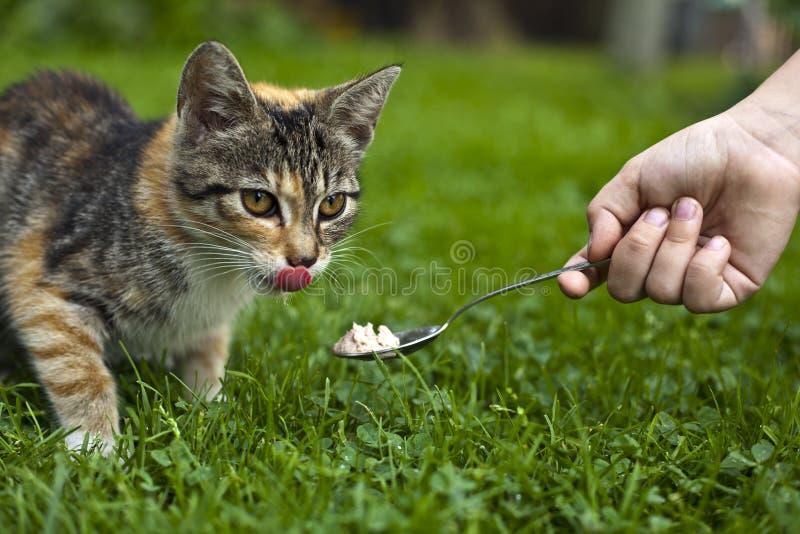 подавать кота стоковые изображения rf