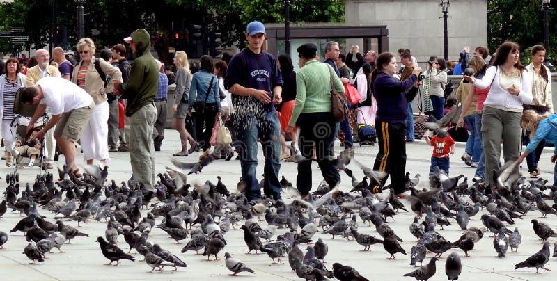 Подавая вихруны в Лондон стоковая фотография