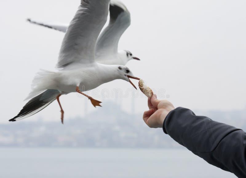 Подавая чайки