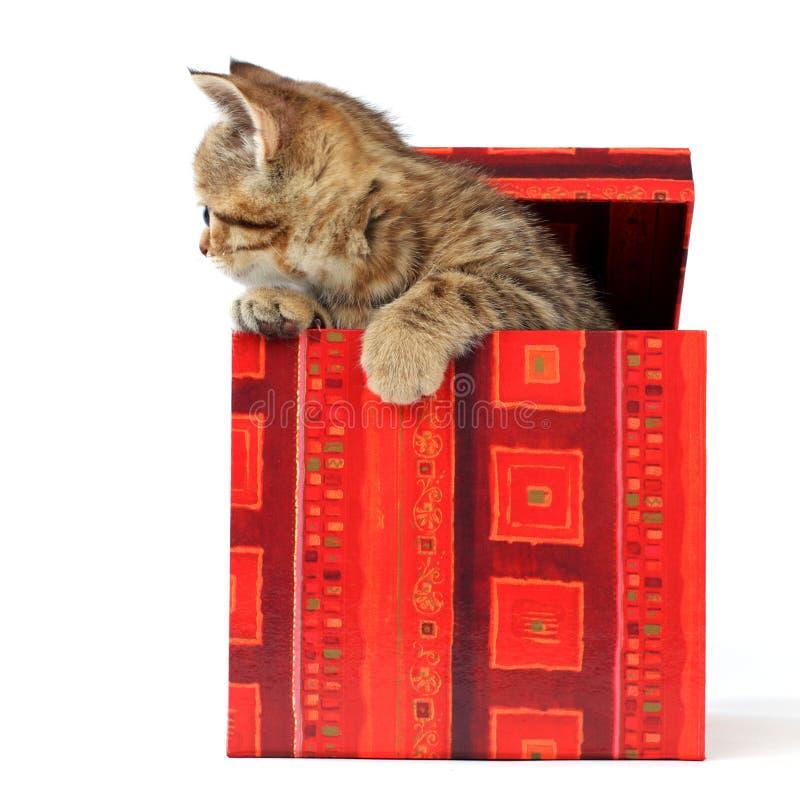 Подарки для кота из коробки