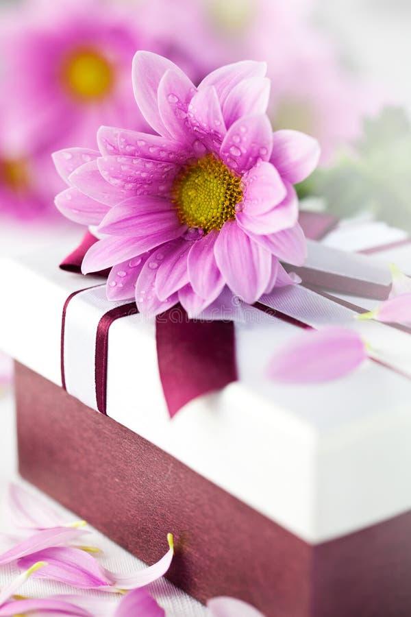 подарок маргаритки коробки шикарный стоковое фото