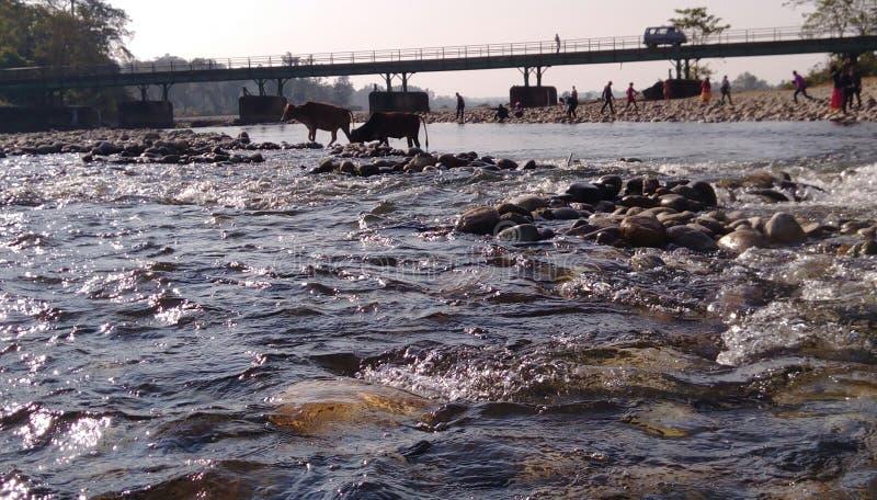 Подача воды в реку стоковые изображения