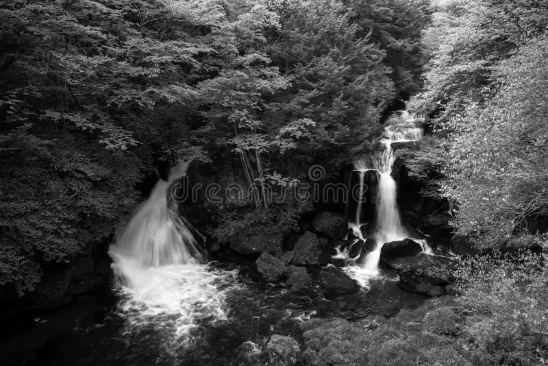 Подача падения Ryuzu через лес в сезоне осени Японии стоковое фото rf