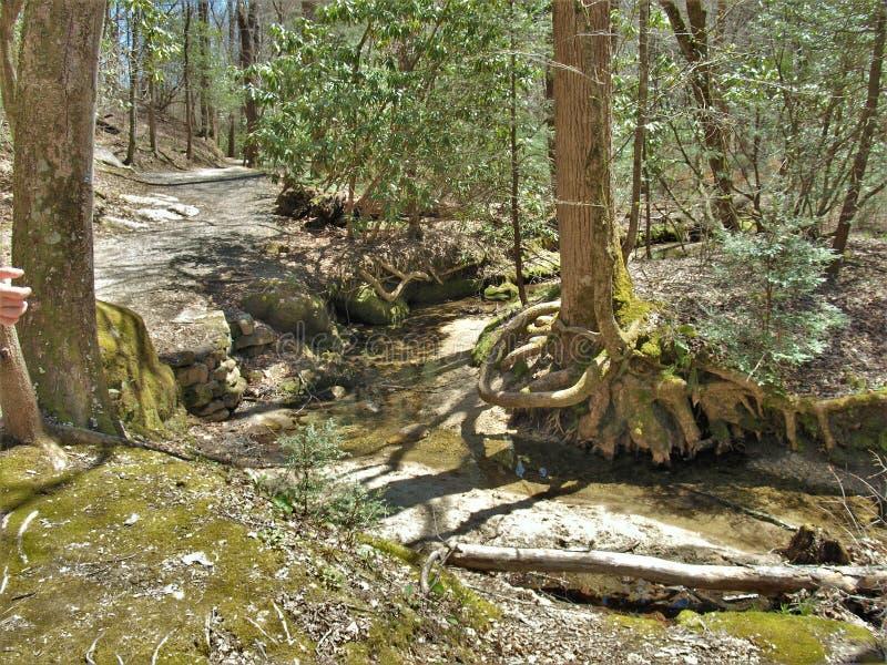 Подвергли действию корни дерева над большой заводью Sandy на каменном парке штата горы стоковое фото