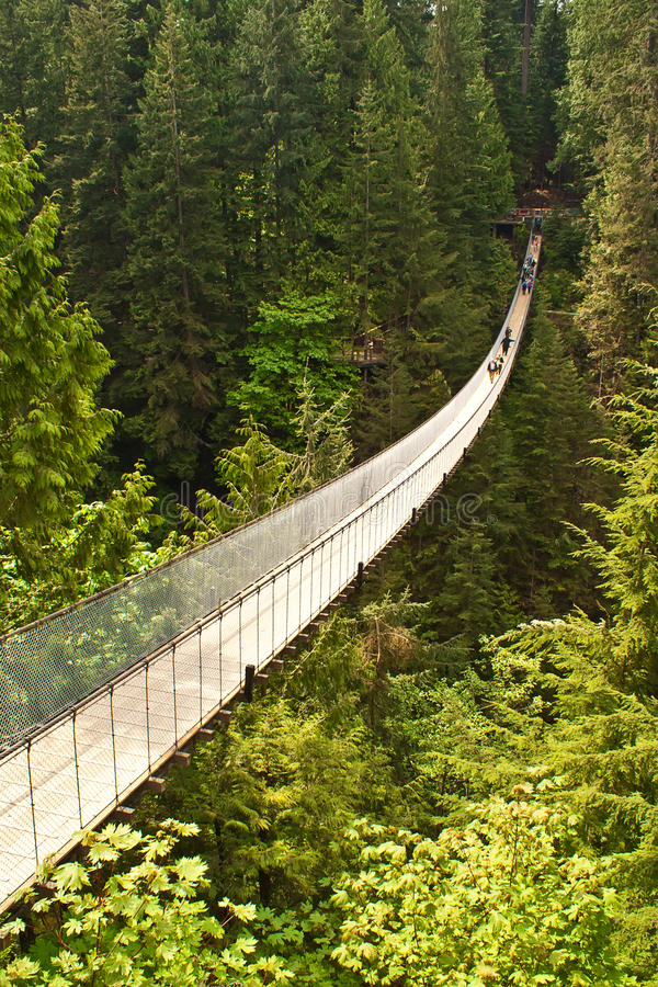 подвес capilano Канады моста стоковые фото