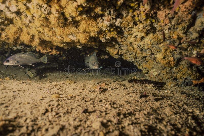 Подводная фотография, рыба рифа стоковые фото