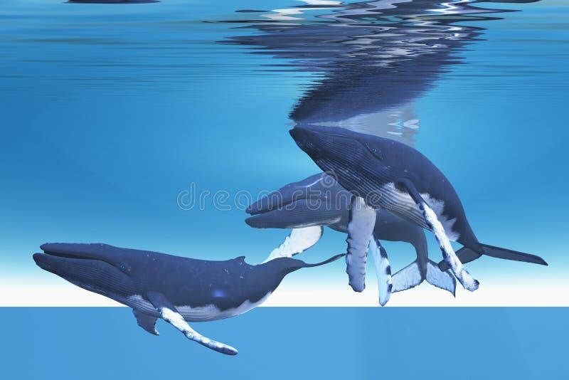 подводные киты стоковое фото