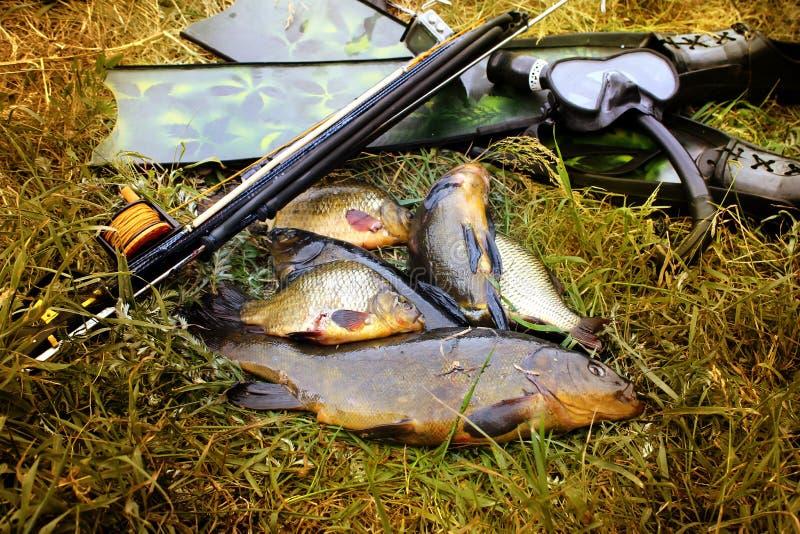 _ Подводные оружие, ребра и рыбы на портовом районе стоковое изображение rf