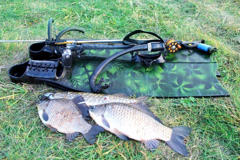 _ Подводные оружие, ребра и рыбы на траве дальше стоковые фотографии rf