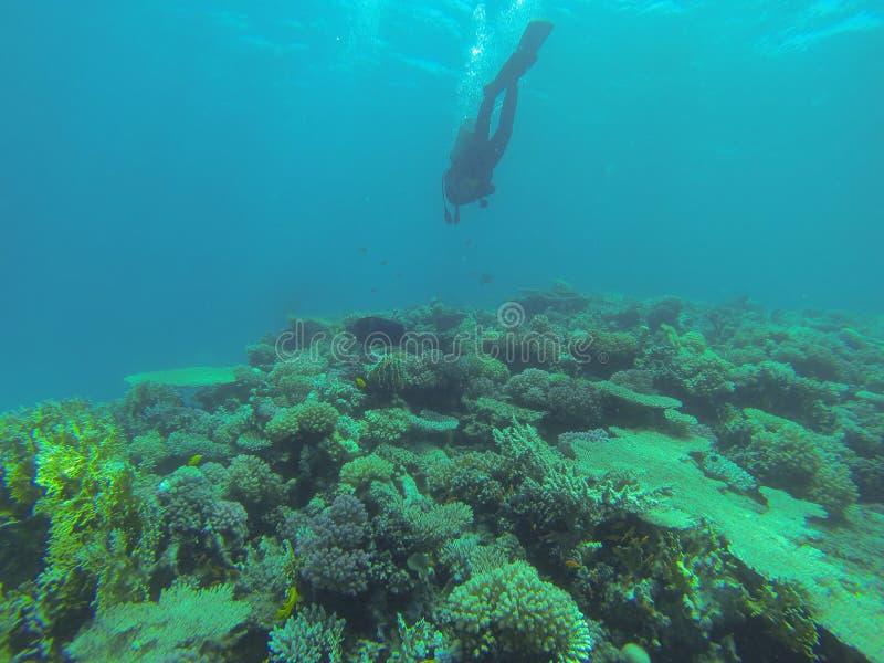 Подводный мир в глубоководье в коралловом рифе и флоре цветков заводов в живой природе голубого мира морской, водолазе стоковое изображение rf