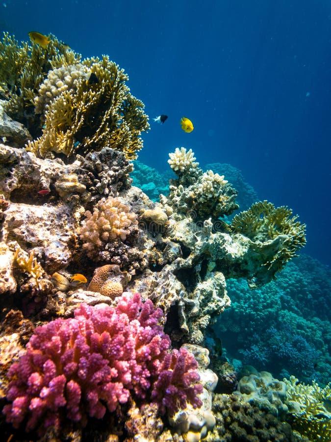 Подводный плавани в Marsa Alam, Египет Коралловый риф стоковое фото rf