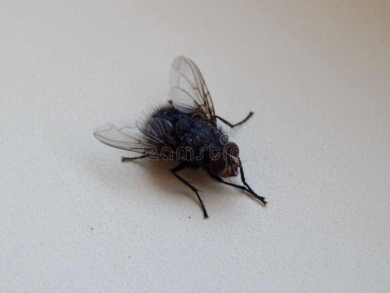Подготовила лукавую муху к полету стоковое изображение rf