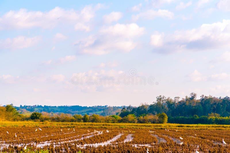 Подготовка земли и цапель стоковое фото