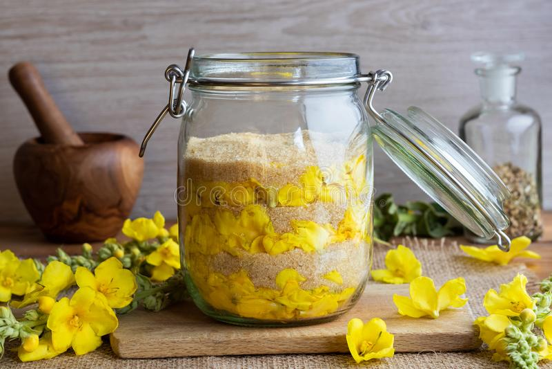Подготовка сиропа mullein от свежего mullein цветет стоковые фотографии rf