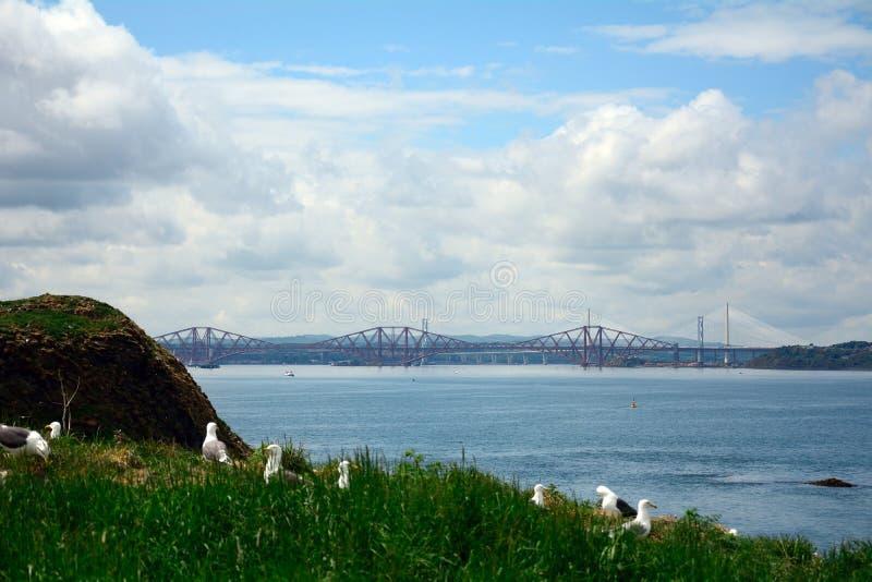 поддерживаемые Черно чайки и вперед мост, остров Inchcolm, Scotla стоковое фото