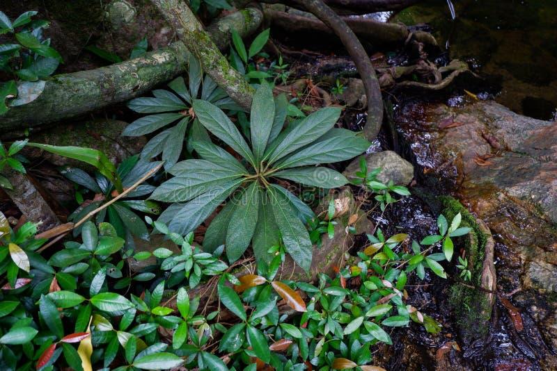Поддерживайте корни дерева и сочную листву в тропическом лесе стоковое фото