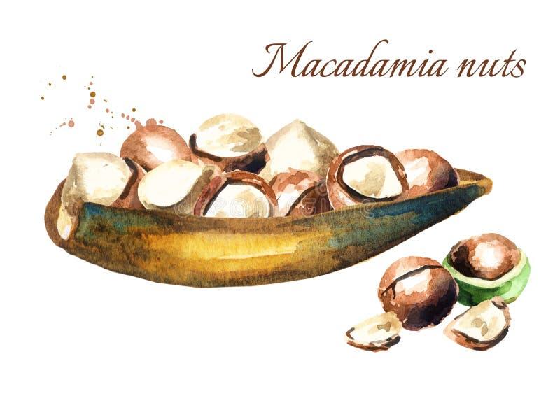 Поддонник с гайками макадамии бесплатная иллюстрация
