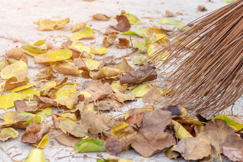 Подметая сухие листья с веником Осень, сезон падения Подметите листья, людей стреловидности, очистите сад Работник обслуживания в стоковое фото