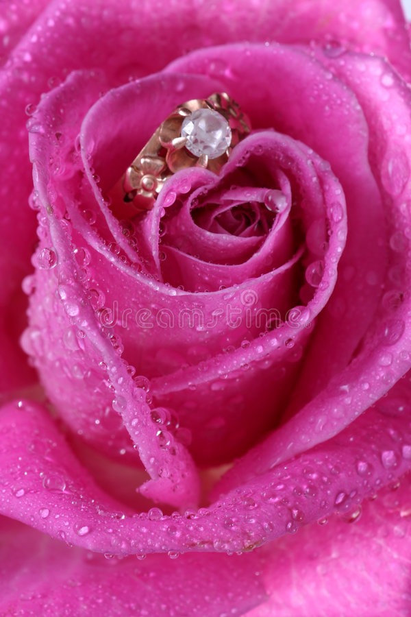 поднимающее вверх близкого кольца пинка золота розовое стоковое изображение rf