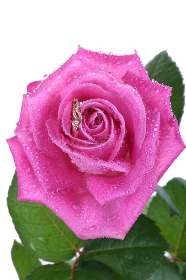 поднимающее вверх близкого кольца пинка золота розовое стоковое фото rf