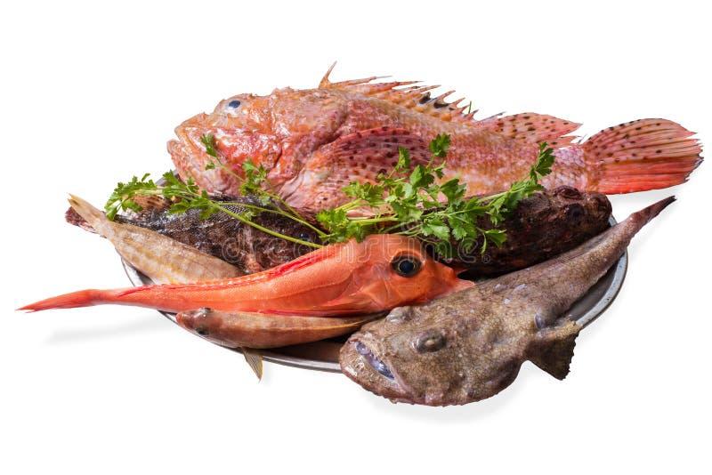 Поднос рыб утеса изолировал стоковое фото rf